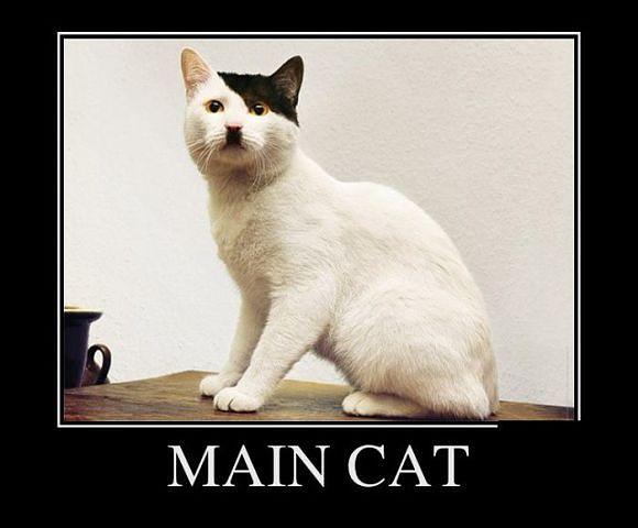 Main Cat